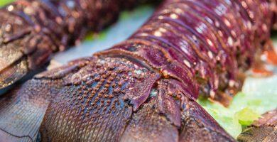 Colas de mar, recetas fáciles y deliciosas