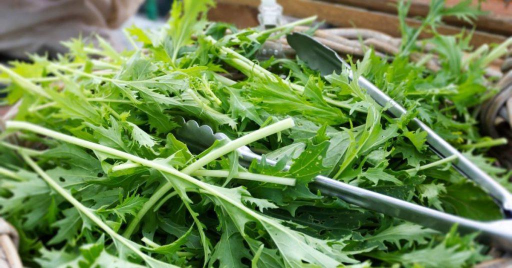 Cómo comer ensalada japonesa de mizuna